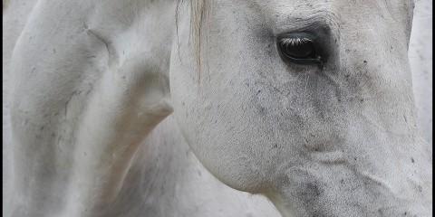 Fotós Szilágyi Nándor Equus c. fotósorozata