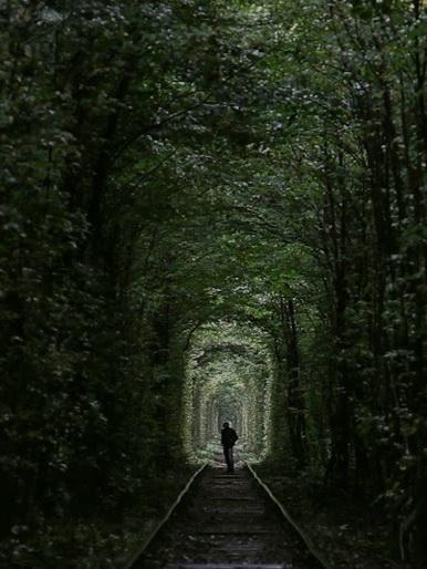 az-erdo-cudna-suma-strange-forest