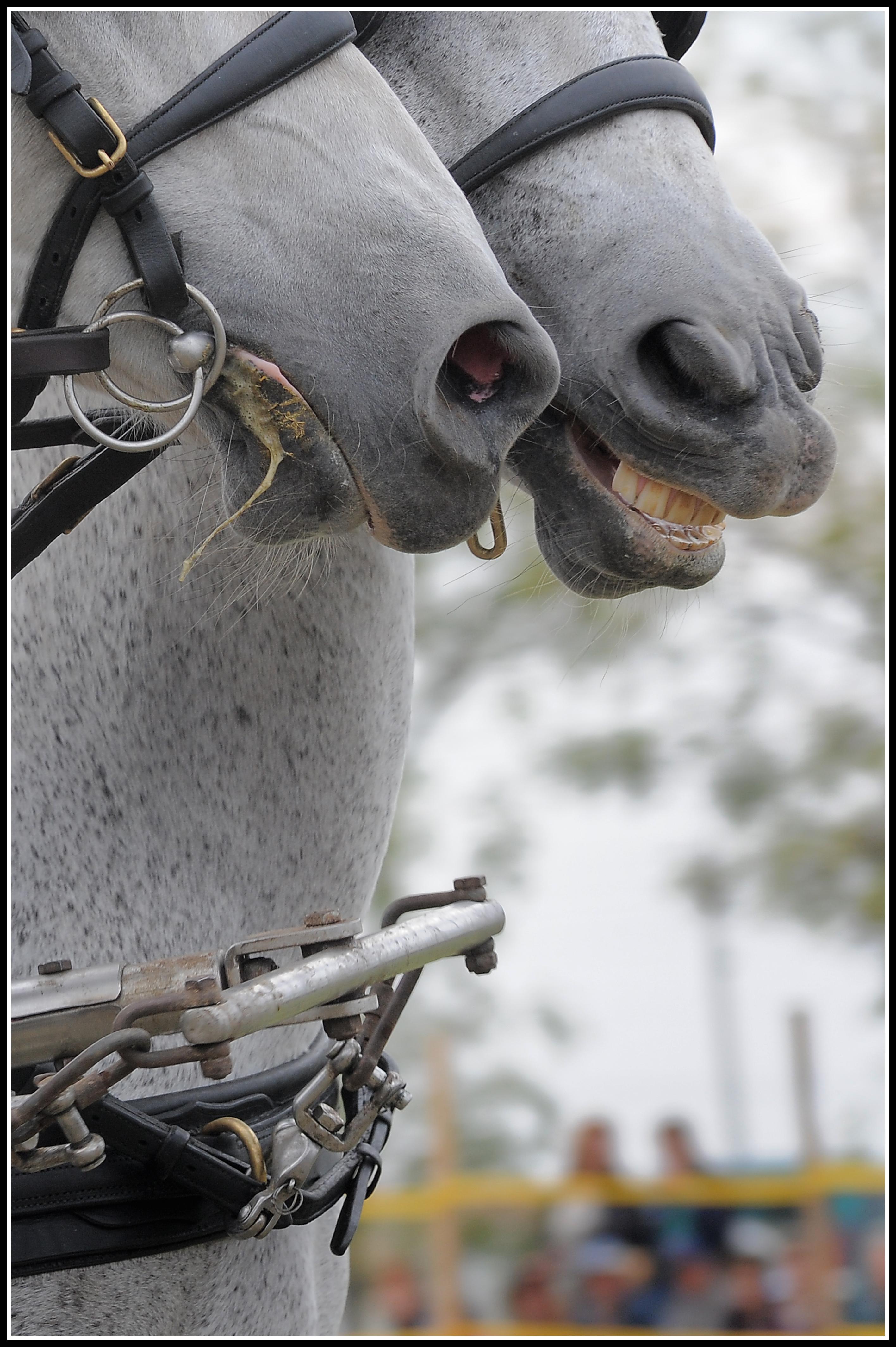 Szilágyi Nándor Equus című fotósorozata